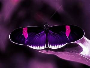 Purple Butterfly Backgrounds | wallpaper, wallpaper hd ...