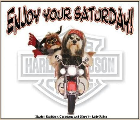 We have here is the beautiful good morning coffee images wishes and quotes. 1094 best Harley MeMes Toons & Biker Sayings images on Pinterest   Biker sayings, Biker quotes ...