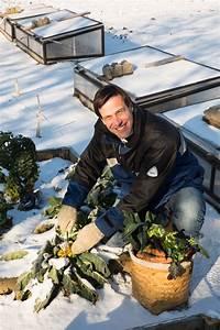 Gemüse Im Winter : frisches gem se im winter ernten l wenzahn l wenzahn ~ Pilothousefishingboats.com Haus und Dekorationen