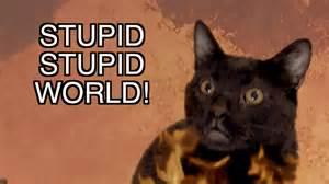 talking cat talking kitty cat stupid stupid world