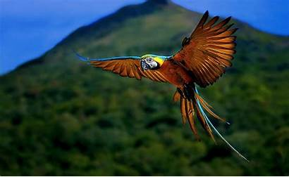 Forest Wallpapers Nature Geographic National Bird Animal
