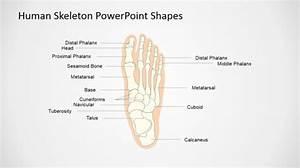 Bones Powerpoint Templates
