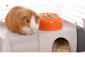 Cage A Cochon D Inde : cage pour cochon d 39 inde conseil d 39 achat auberdog ~ Dallasstarsshop.com Idées de Décoration