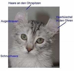 Was Brauchen Katzen : katzen tasthaare ~ Lizthompson.info Haus und Dekorationen