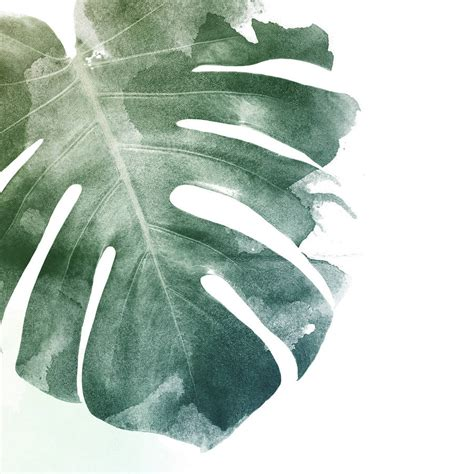 monstera leaf art print  georgie st clair