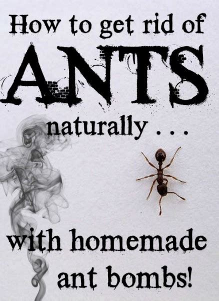 How To Get Rid Of Ants Inside The House by How To Get Rid Of Ants Naturally With Ant Bombs