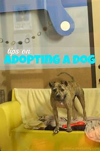 clear the shelters tips on adopting a dog With adopting a dog tips