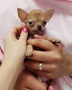 Small Dogs For ... Dogs For Adoption