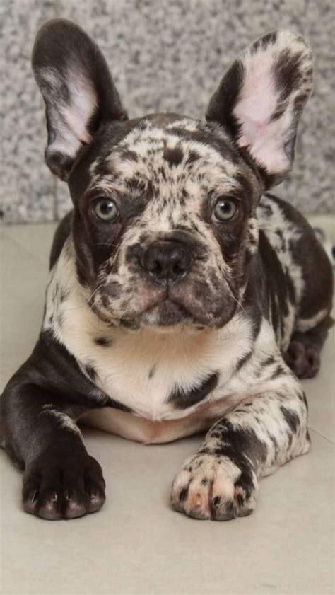 Augi - My Dog Breeders - Part 73