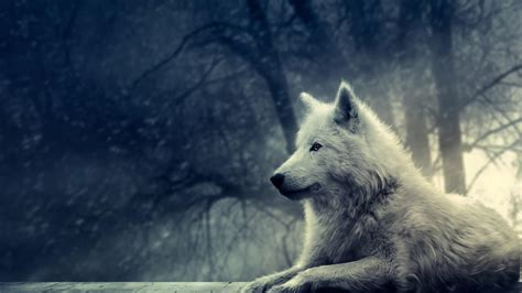 Hd Wolf Wallpapers 1080p Wallpapersafari