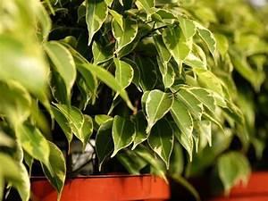 Pflanzen Im Schlafzimmer : diese pflanzen solltest du im schlafzimmer haben pinterest pflanzen gesundheit und schlafzimmer ~ Indierocktalk.com Haus und Dekorationen