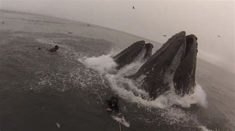 Divers Capture What It's Like To Almost Get Eaten By A