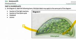Solved  Hhmi Biolnteractive Animation Photosynthesis
