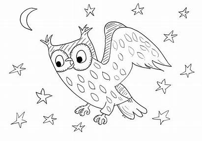 Coloring Night Owl Birds Starry Pages Animals