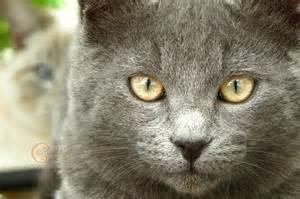 cat faces cat faces catnip