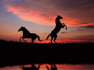Horse Wallpapers HD Pictures