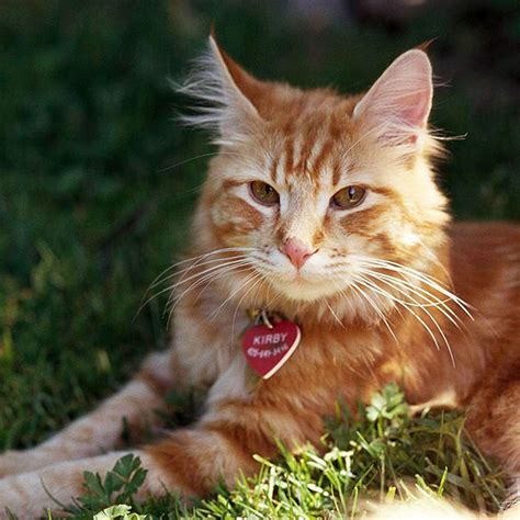 34 College Mascot Names For Your Cat