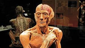 Body Worlds Returns to the TELUS World of Science | By ...
