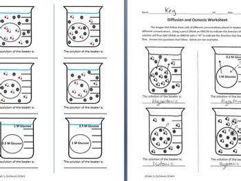 Osmosis And Diffusion Worksheet By Sidol's Science Store Tpt