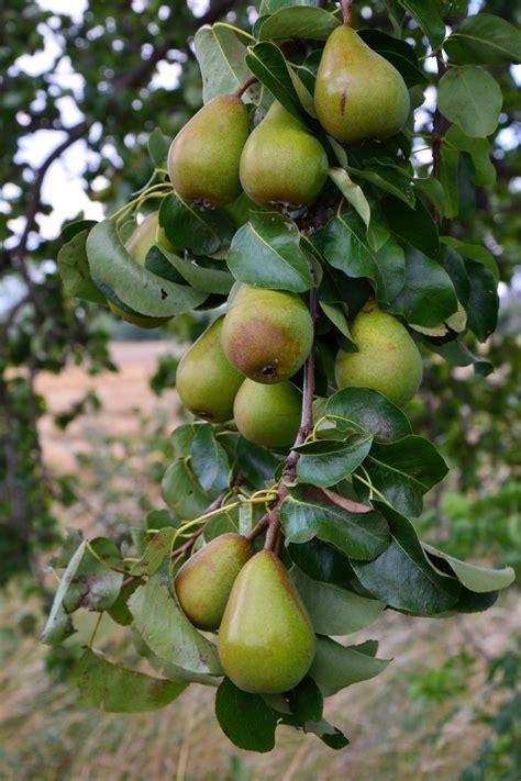 Gambar : pohon cabang menanam bunga Kebun buah musim