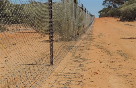 wild dogs  fencing  answer beef central