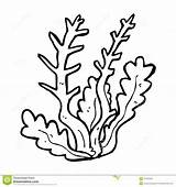 Seaweed Coloring Pages sketch template