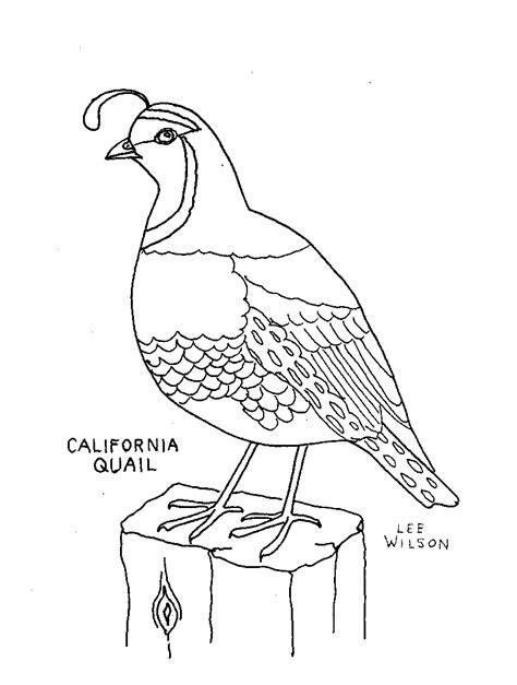 Quail Coloring Page California Quail Coloring Page