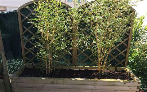 planter des bambous