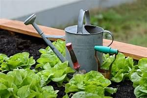 commonsphoto challenge2016 october gardeningvoting
