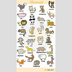 Animal Names Types Of Animals With List & Pictures  English Vocabulary  English Vocabulary