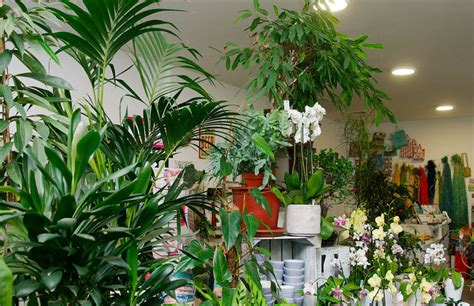 Zimmerpflanzen In Wien Kaufen