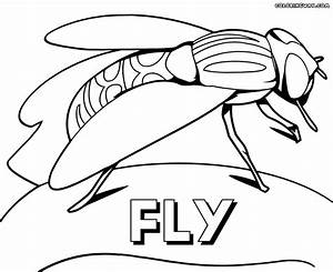 Fly coloring pages | Coloring pages to download and print