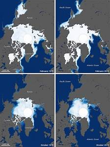How Shrinking Sea Ice May Be Shrinking Polar Bears