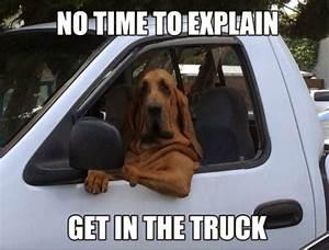 Funny Friday Dog Memes- SportLeash
