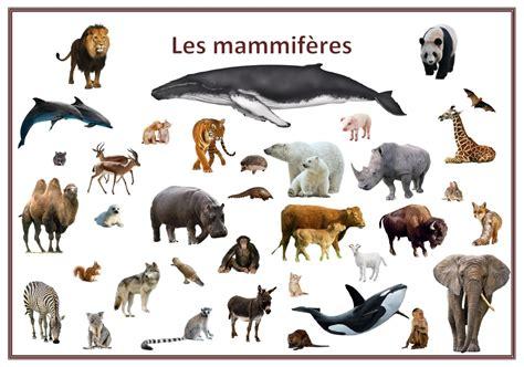 la vitrine des animaux jeu de 7 familles quot classification des animaux quot les p loups