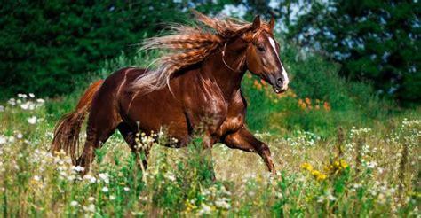 bildschirmhintergrund pferde bilder und sprueche fuer