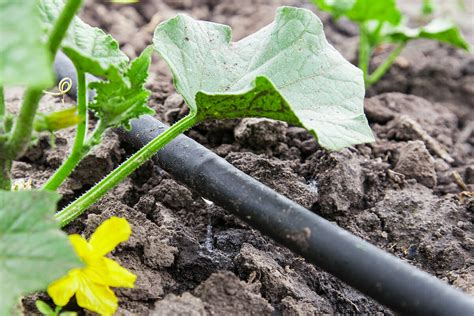garden irrigation system how to build a drip irrigation system modern farmer