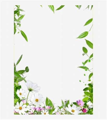 Border Flower Frame Floral Drawing Clipart Clip