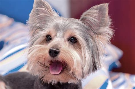 cute small dog breeds  cutest small dogs