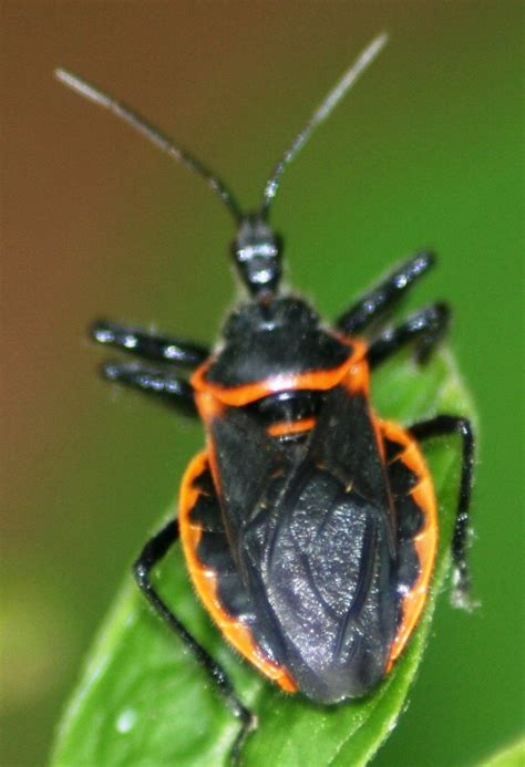 identifying garden pests and bugs in ontario down the