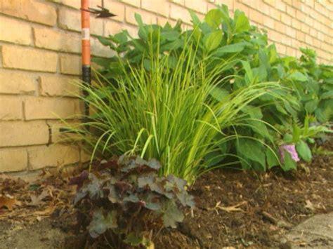 plants for facing gardens north facing garden hgtv