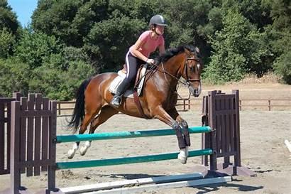 Horse Brown Jumping Jump Horses Really Dog