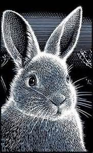 Scratchboard Art Rabbit