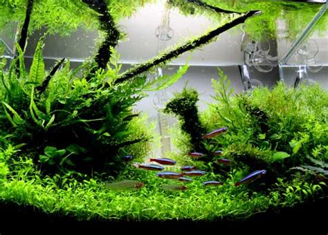 Aquascape Designs For Aquariums by A Guide To Aquascaping The Planted Aquarium