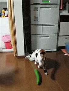 Scared Cat GIF - Find & Share on GIPHY