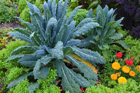 Easy Tips For Companion Planting For Your Garden