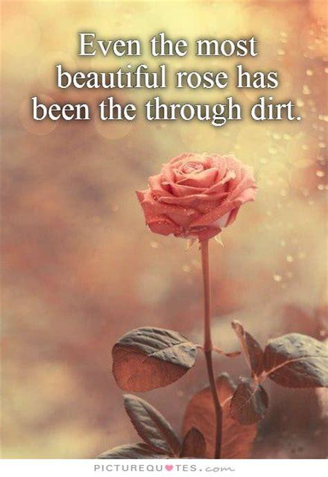 rose  beautiful quotes quotesgram