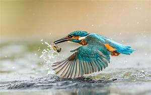 Kingfisher Bird With Caught Fish Desktop Wallpaper Hd : Wallpapers13.com  Bird