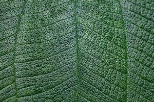 Plant Stem Texture | www.pixshark.com - Images Galleries ...