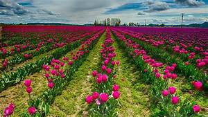 Most Beautiful Flowers Wallpapers – HD Flowers Wallpapers ...